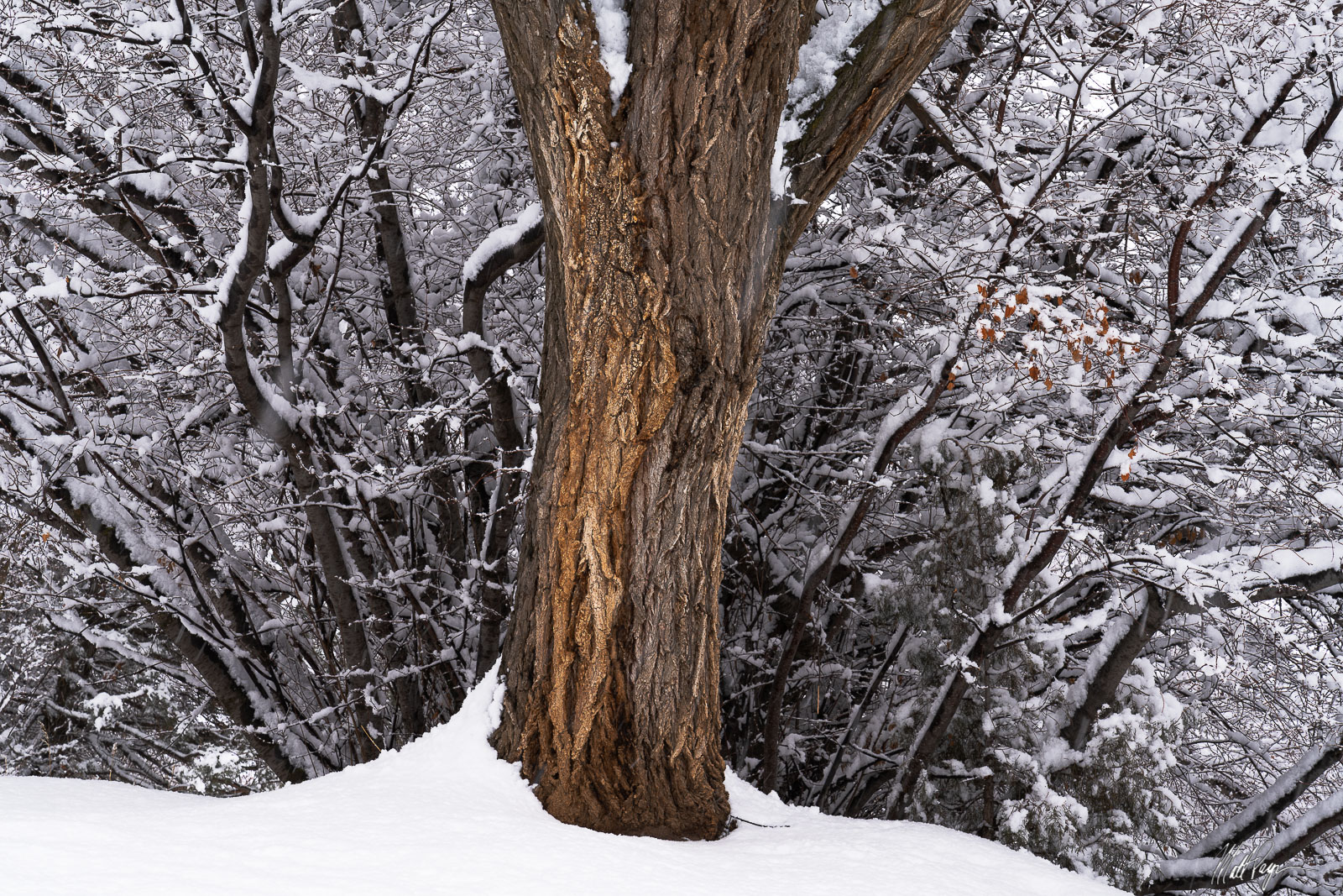 A snow storm near my home in Durango, Colorado compelled me to venture out on a local nature trail to see what I could discover...