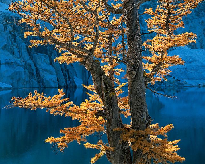 Alpine Lakes,  Larch,  Washington,  autumn,  blue,  trees,  water,  wilderness,  yellow, The Enchantments, photo