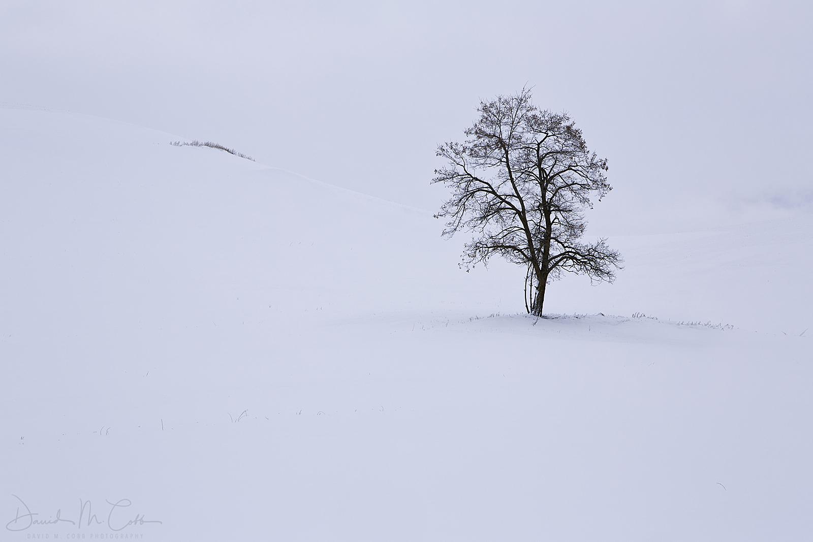 sky, winter, white, tree, lone tree, crop, crops, wheat, WA, Washington, agriculture, stormy, moody, Palouse, farm, farming, minimal, sparse, minimalist, photo
