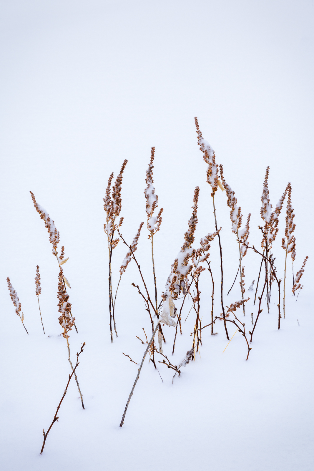 Delicate, Location, Nature, North America, Plant, Simplicity, Sky, Snow, Style, Texture, United States, Vegetation, Vermont, Weather #, Winter, photo