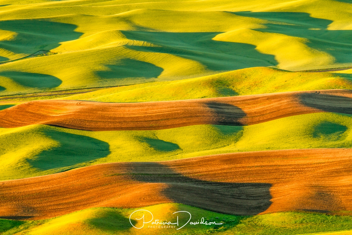 North America, Pacific Northwest, Palouse, Steptoe Butte, Washington, Washington state, Whitman County, agriculture, farm fields, framlands, rolling hills, usa, wheat fields, photo